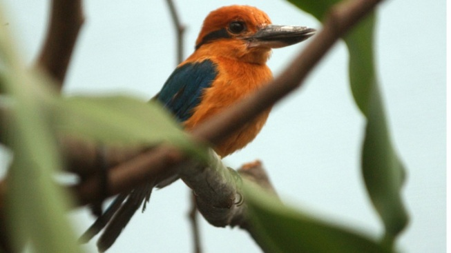 Rare Kingfisher Hatched at New Mexico Zoo