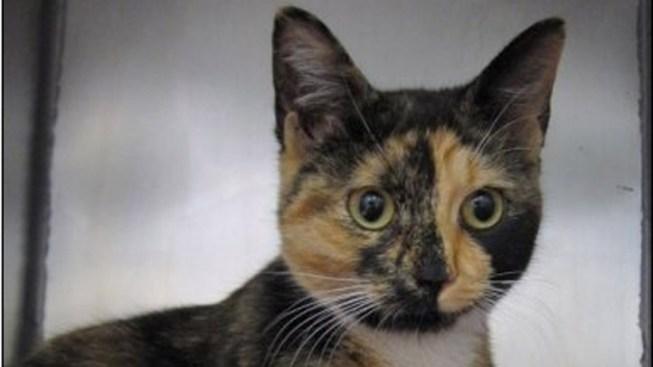 Rabid Kitten Warning in Westchester