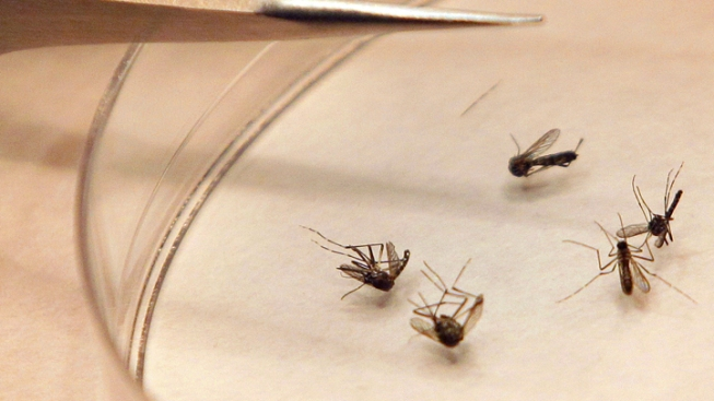 Officials Confirm First West Nile Death on LI