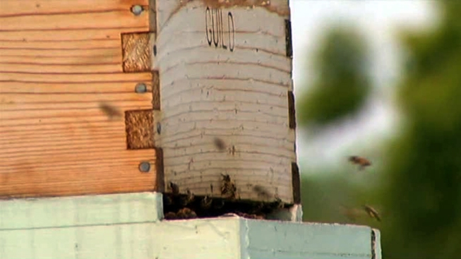 3 Million Bees Confiscated from Queens Hobbyist