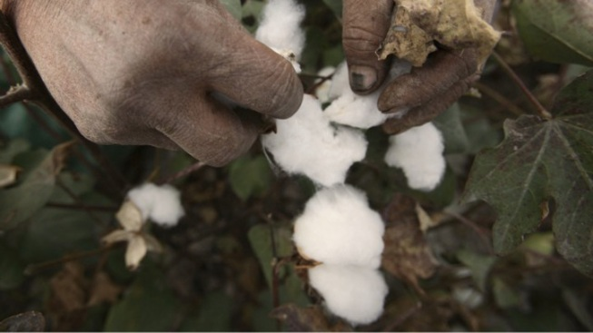 Cotton Prices Soar to Civil War-Era Premiums
