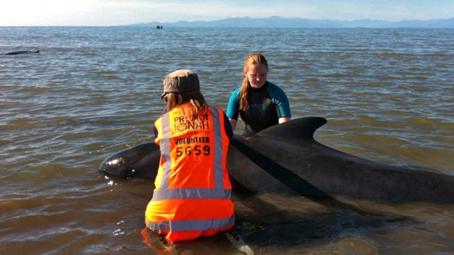 New Zealand Shoots 33 Beached Whales