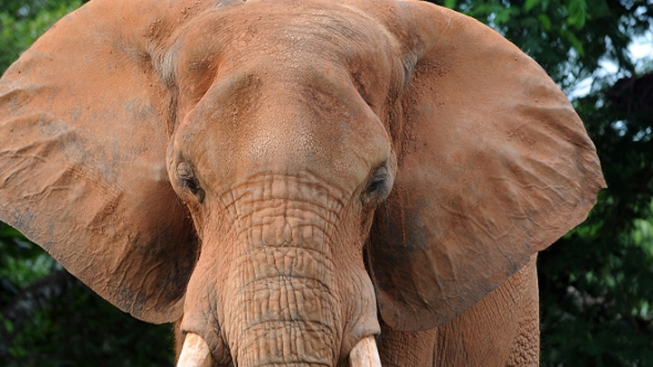 Manhattan Jewelry Company Admits Having Illegal Ivory