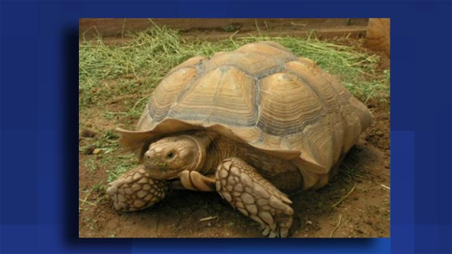 600-Pound Tortoise Seized From NJ Home