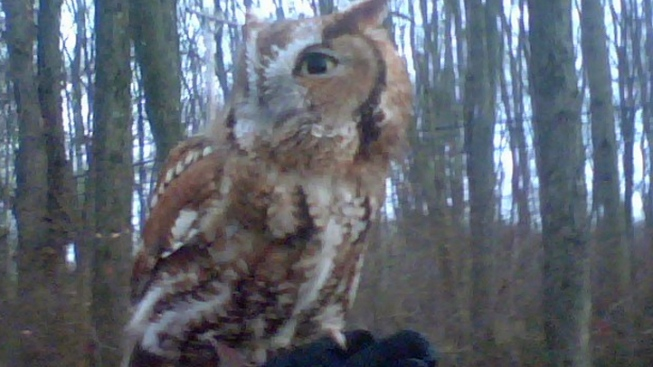 Who Who Who Did It? Owl Stolen from Bird Rehab Facility in NJ