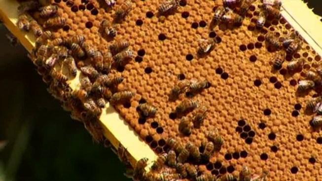 Thousands of Bees Kept in Car Escape in Brooklyn, Wreak Havoc