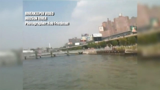 A fire at a Harlem treatment plant forced the facility to dump sewage into the Hudson River, shutting both that river and the East River from swimmers and kayakers until further notice. The Riverkeeper Foundation went out near the center to take footage of sewage in the river.