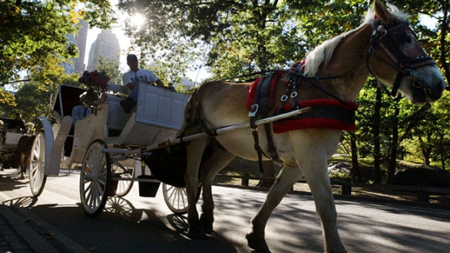 Lawmakers Seek End of Horse-Drawn Carriages in NYC