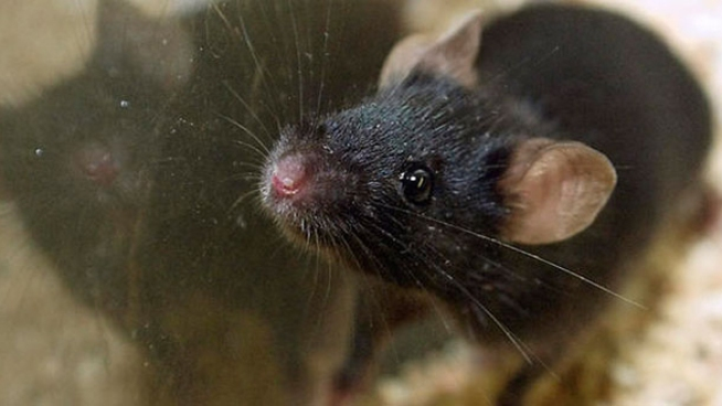 LI Professor Contracts Hantavirus in Adirondacks