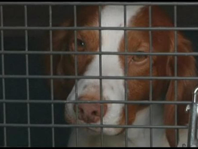 Reward offered for missing NY shelter dogs