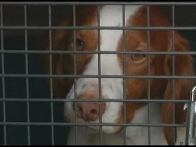 Two Arrested In Mt. Vernon Animal Shelter Theft