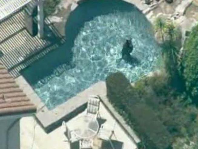 Watch raw video of a bear taking a dip in <a title=