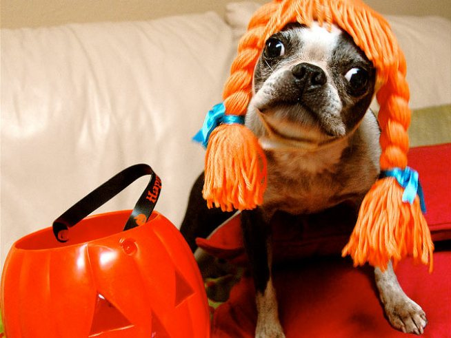 10/30-31: Dogs in Costumes, Crypt Crawls, a Pumpkin Catapult & More