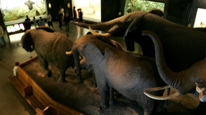 Creationists Take Over Natural History Museum