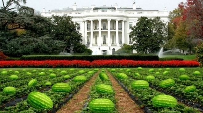 Mayor Who Sent WH Watermelon Pic Will Resign
