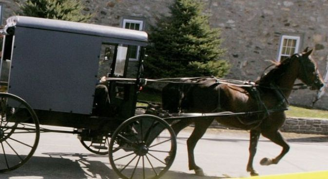 Whoa Nelly! Police chase horse and buggy