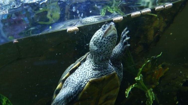 Thief Steals Pricey Turtle From Pet Store