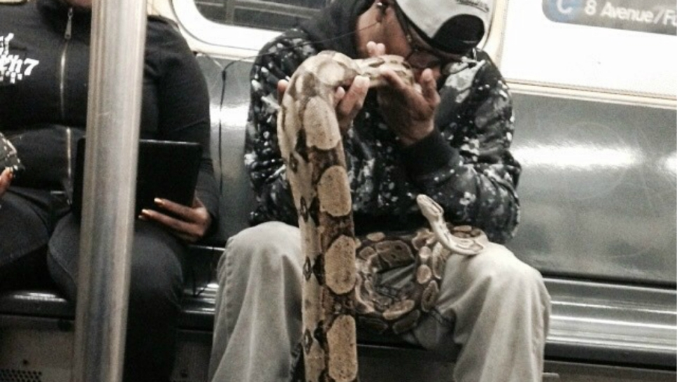 PHOTOS: Snakes on the Subway Train