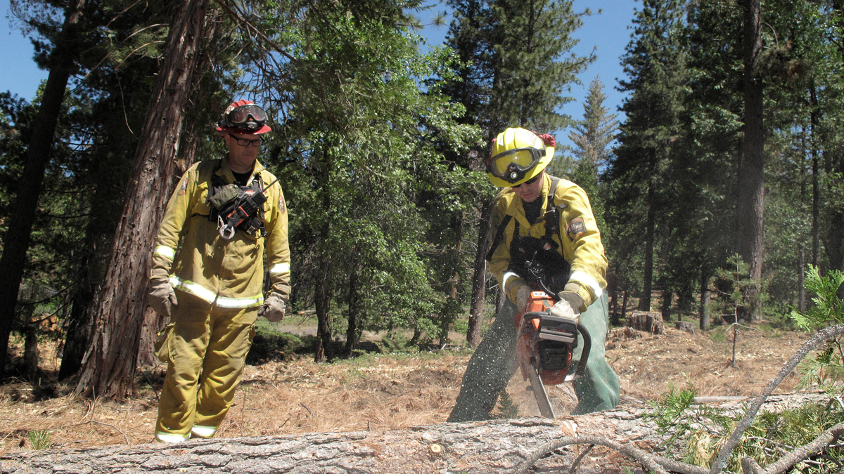 In this June 6, 2016 photo, firefighters with the California Department of Forestry and Fire Protection remove dead trees near Cressman, Calif. California's drought and a bark beetle epidemic have caused the largest die-off of Sierra Nevada forests in modern history, raising fears that trees could come crashing down on people or fuel catastrophic wildfires, devastating mountain communities and choking the sky with smoke.