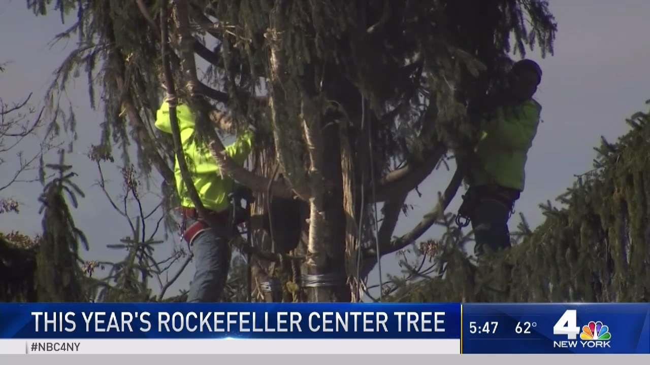 A Look at 2018\'s Rockefeller Center Christmas Tree - NBC New York