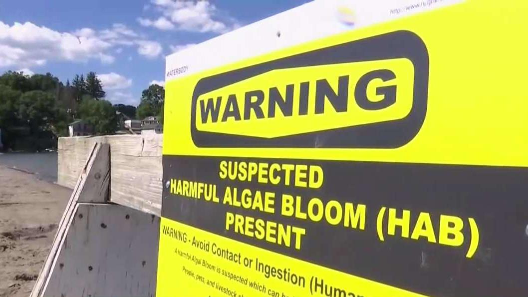 NJ Announces $13M in Funds to Combat Harmful Algal Blooms