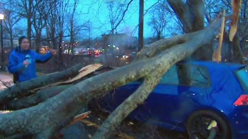 Falling Trees and Damage in Westchester - New York news