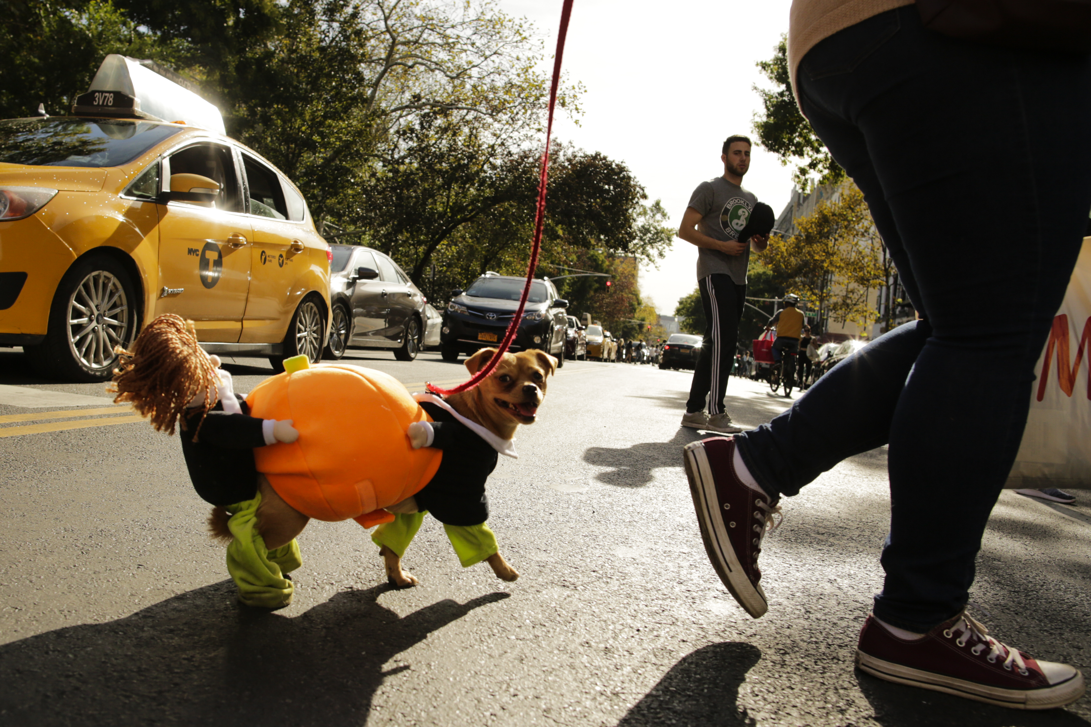 Pups in Costume at the NYC Halloween Dog Parade