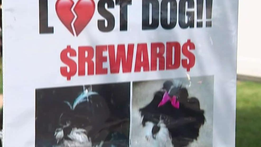 LI Couple Desperate for Stolen Dog to Be Returned