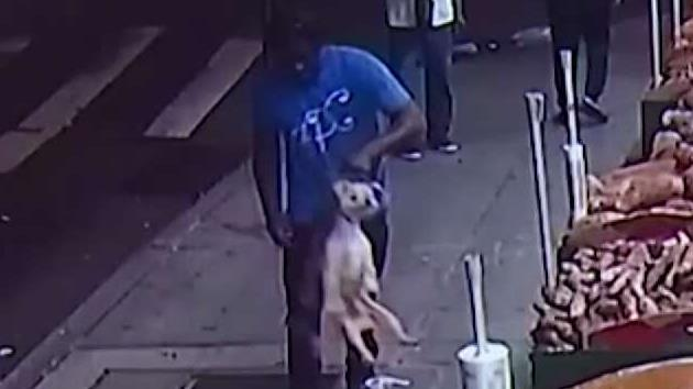 Man Caught on Camera Allegedly Stealing Dog in Brooklyn