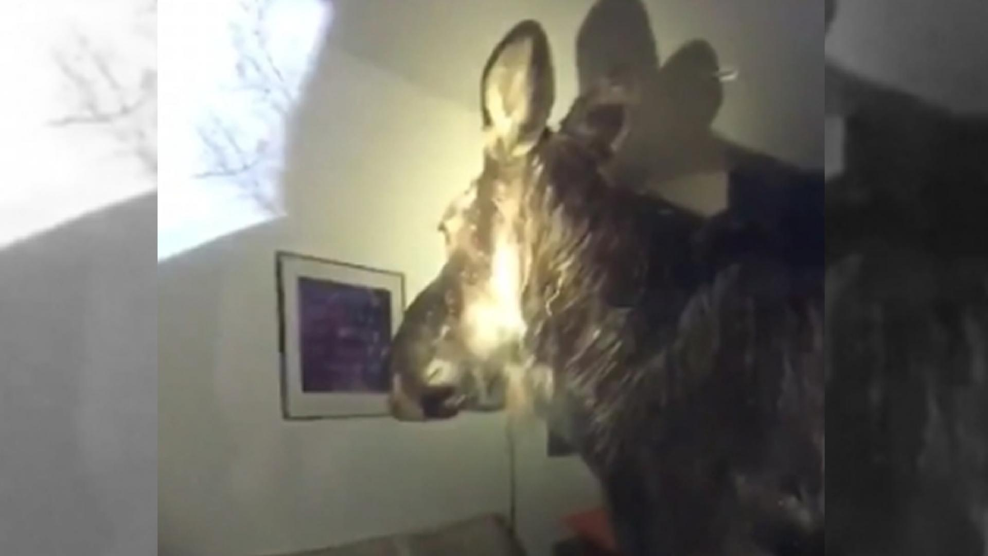 Moose Crashes Through Window, Lands in Couple's Basement