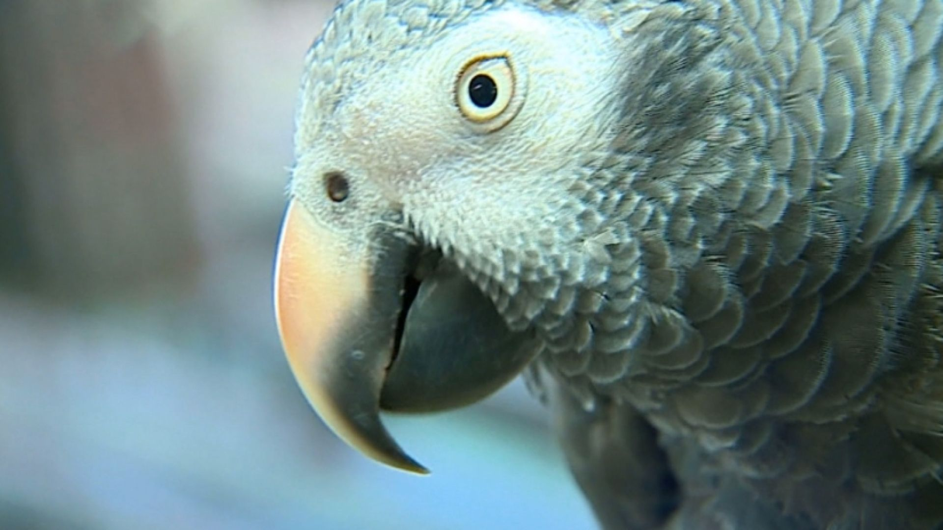A Michigan couple is hoping a foul-mouthed parrot will help find their son's killer.