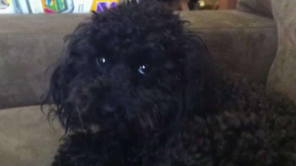 NJ Family Desperately Hopes for Return of Family Dog
