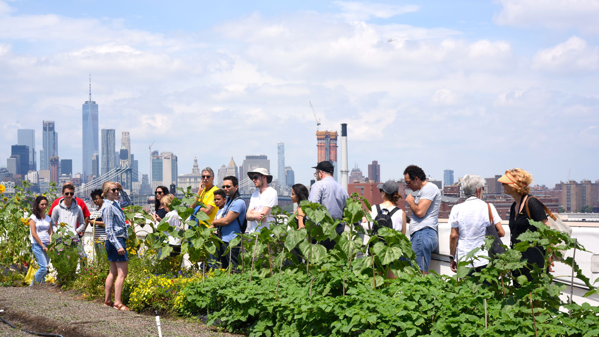 NYC Largest Rooftop Farm to Open Sunday in Sunset Park