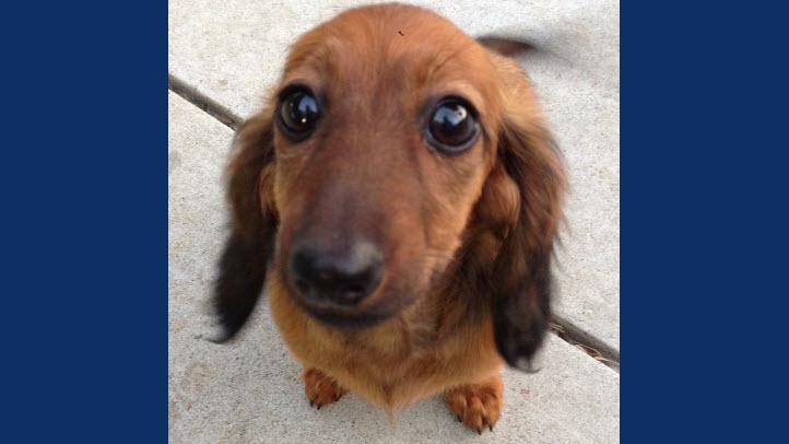 Dog\'s Regular Groomer Speaks Out on PetSmart Death - NBC Bay Area