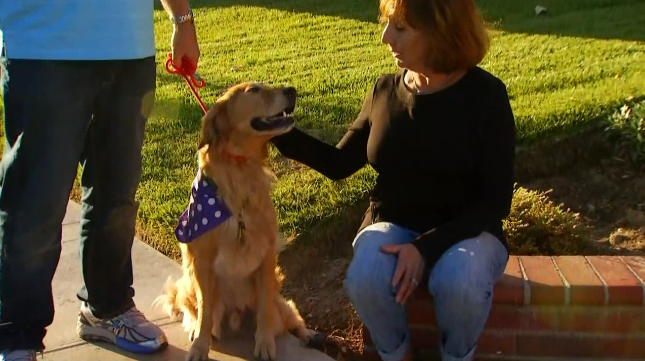 Fergus, the golden retriever who captured the hearts of many as the resilient dog who survived a brutal acid attack last year, has recovered tremendously and is training to become a therapy dog for burn victims. He will also make an appearance on Cesar Millan's new show
