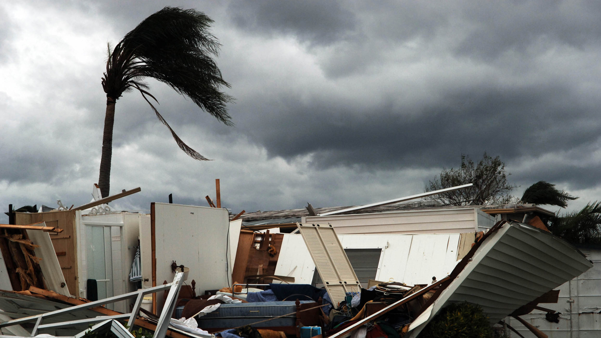 A lone palm tree stands by a demolished mobile home in Park City Estates in Davie, Florida after Hurricane Wilma passed through, Sunday, Oct. 24, 2005.